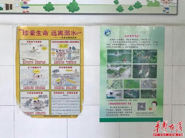 衡东 爱鸟周 宣传教育进校园